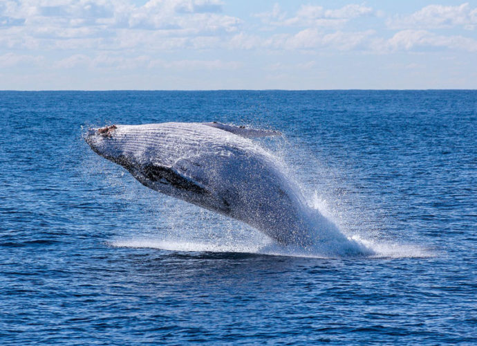 Balena-copertina