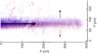Il fascio di polaritoni con diversa polarizzazione (blu e rossa) propaga accelerato nello spazio interno al dispositivo (verso destra, freccia nera) ed è deviato lateralmente in senso opposto (alto e basso, freccia blu e rossa) a seconda della curvatura che agisce sulla sua carica vettoriale (cioè sulla sua polarizzazione). Crediti: il giornale.