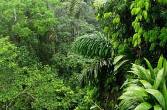 foresta_tropicale-in