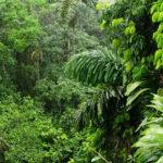 foresta_tropicale-cop