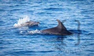 14cnrbalene_mare_pesci_delfini-in