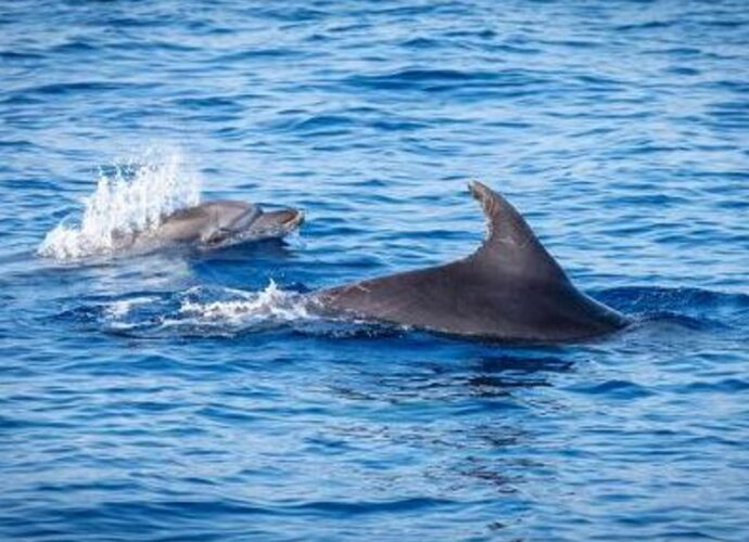 14cnrbalene_mare_pesci_delfini-cop