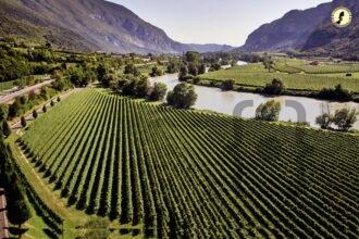 Vigneto Valdadige - fiume Adige