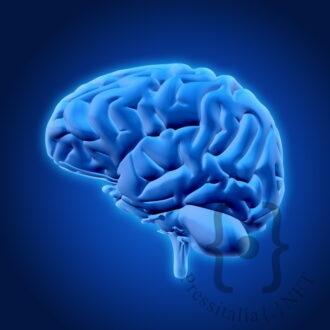 cervello-in