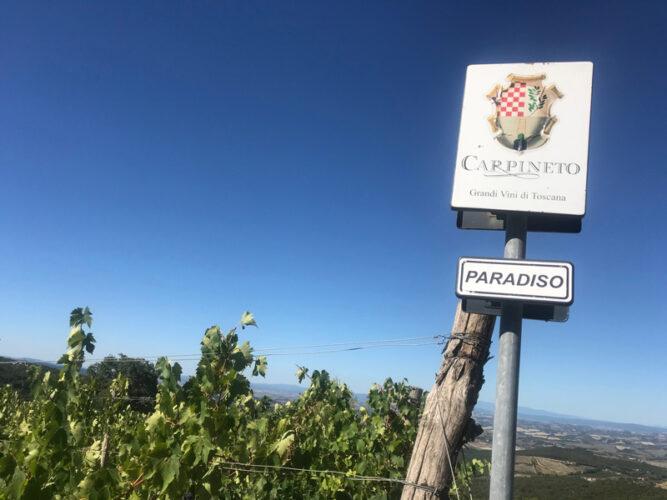 Carpineto-Montalcino-Vigneto-PARADISO-cop