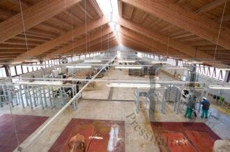 Centro Tori Brussa di Caorle (VE) - interno stalla di produzione