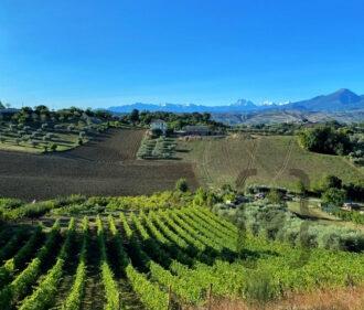 Vecchie vigne Vigneti Vallorani - panorama
