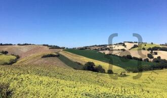 Itinerario 4: Le Marche dell'antica strada consolare