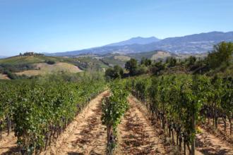 Consorzio-Tutela-Vini-Montecucco-1