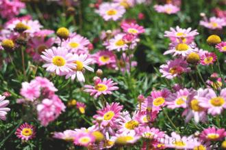 Flower-Show-in