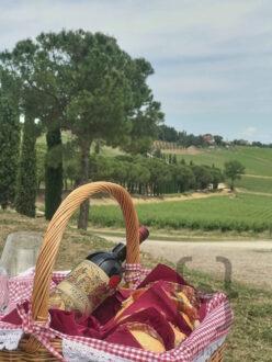Carpineto - Pic Nic al Dogajolo nella tenuta di Montepulciano