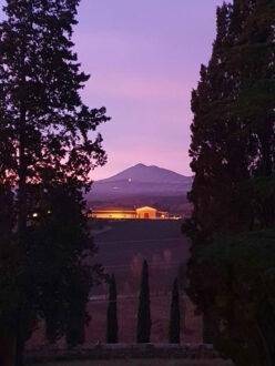 CARPINETO-Tenuta-di-Montepulciano-all'imbrunire